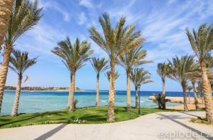 Pobřeží s palmami